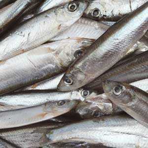 Online Fishmongers Fresh And Frozen Seafood Delivered To