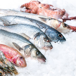 Buy fresh and frozen fish for Fresh fish delivery
